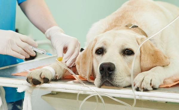Surgery & Anesthetics